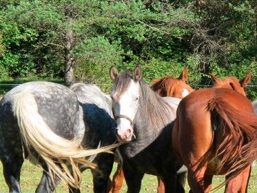 http://hotelabetos.es/wp-content/uploads/2016/02/caballo.jpg